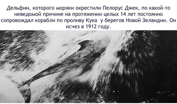 Истояри дельфина по имени Пелорус Джек