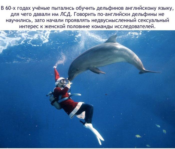 В 60-х годах учёные пытались обучить дельфинов английскому языку