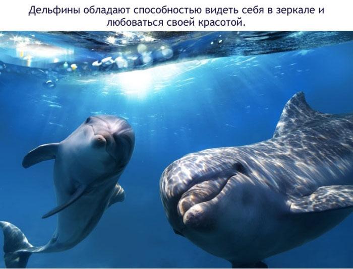 Дельфины обладают способностью видеть себя в зеркале