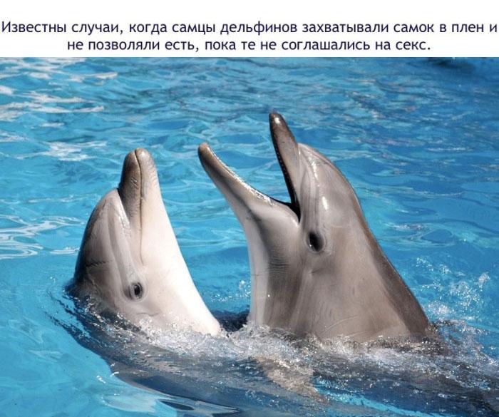 Известны случаи, когда самцы дельфинов захватывали самок в плен