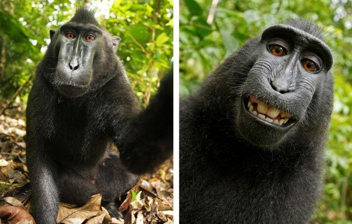 Лучшие фотографии животных (50 фотографий)