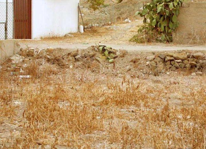 Загадка дня: Вы видите кота? (5 фото)