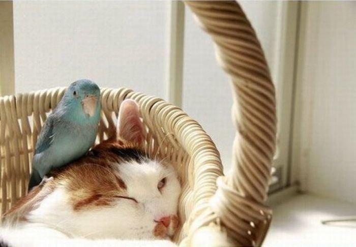 Чем закончится эта дружба? (4 фотографии)