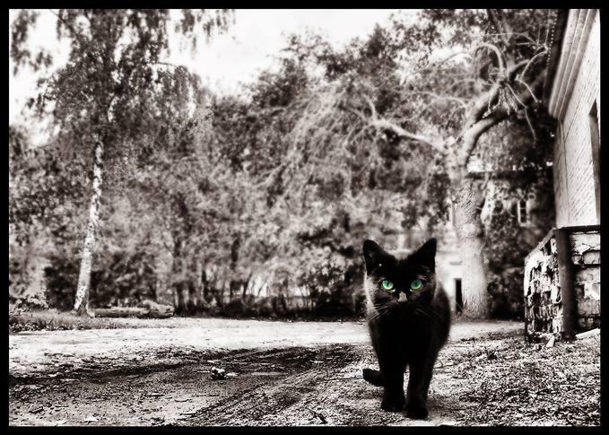 серый мир с котом