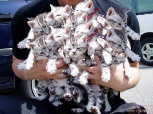 Позитив дня: Букет котов!