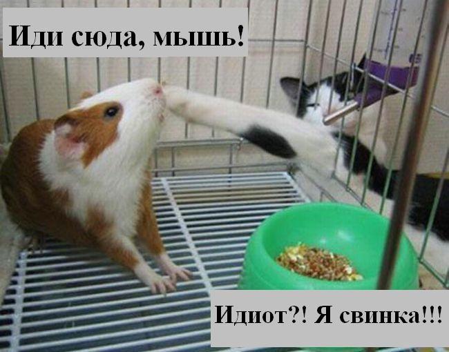 http://jokesland.net.ru/p/kots1/kototalk_02.jpg