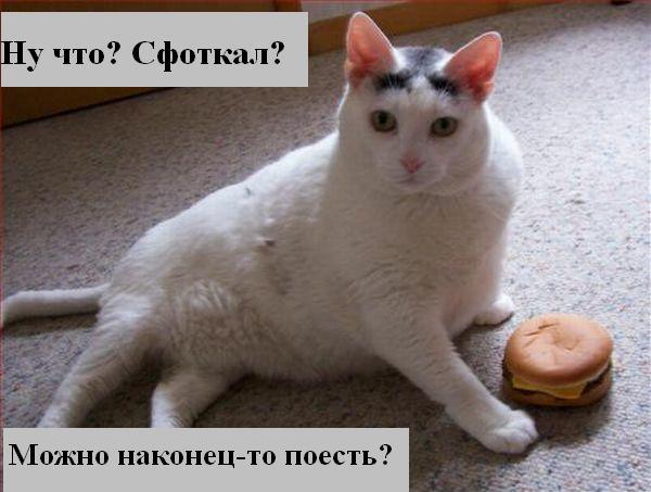 http://jokesland.net.ru/p/kots1/kototalk_09.jpg
