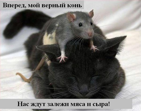 http://jokesland.net.ru/p/kots1/kototalk_16.jpg