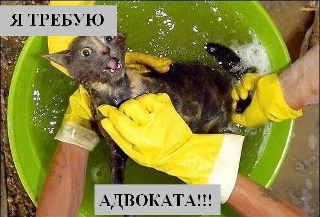 http://joksland.ru/p/kots1/kototalk_18.jpg