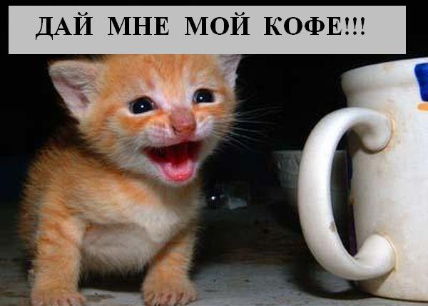 http://joksland.ru/p/kots1/kototalk_24.jpg