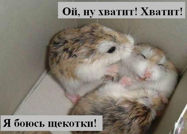 http://jokesland.net.ru/p/kots1/kototalk_25.jpg