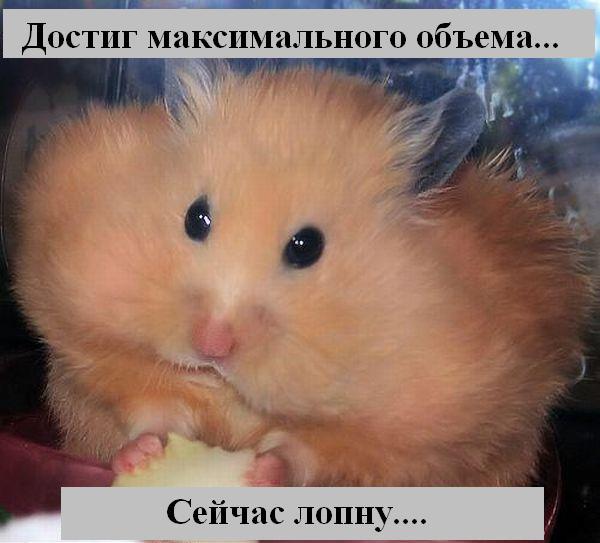 http://jokesland.net.ru/p/kots2/kototalk_27.jpg