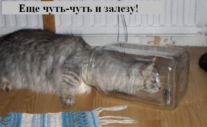 http://jokesland.net.ru/p/kots2/kototalk_28.jpg