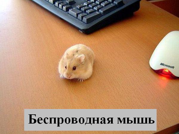 http://jokesland.net.ru/p/kots2/kototalk_31.jpg