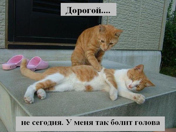http://joksland.ru/p/kots2/kototalk_37.jpg