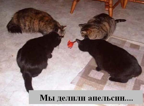 http://jokesland.net.ru/p/kots2/kototalk_38.jpg