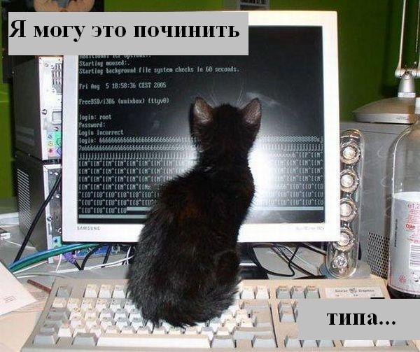 http://jokesland.net.ru/p/kots2/kototalk_39.jpg