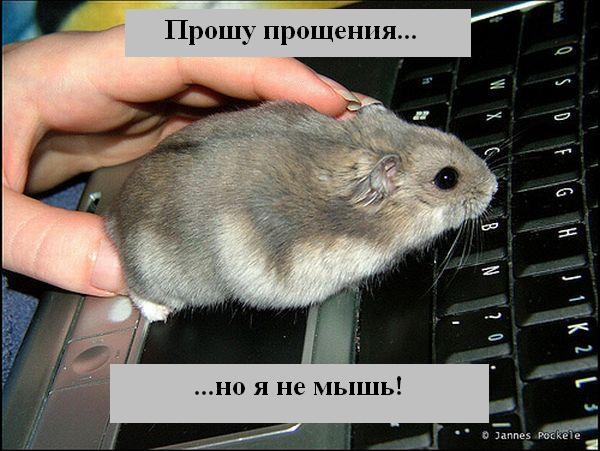http://jokesland.net.ru/p/kots2/kototalk_46.jpg