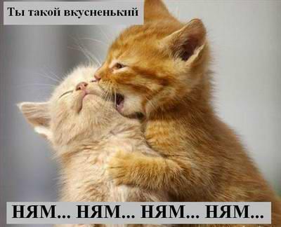 О чем думают кошки? Часть 2