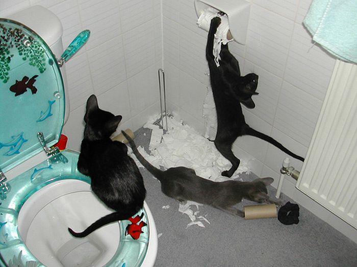 Коты хулиганят (67 фотографий)