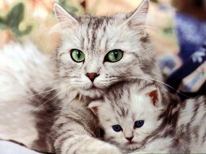 Маленькая кошка знает, что такое любовь