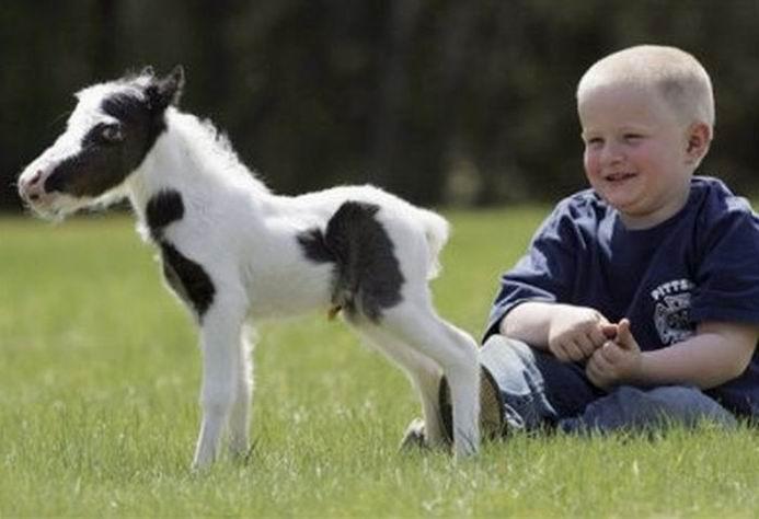 Позитив дня: Самая маленькая мини-лошадь в мире (25 фотографий)
