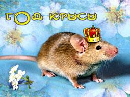 Год крысы наступает