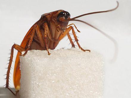 Гадания на тараканах