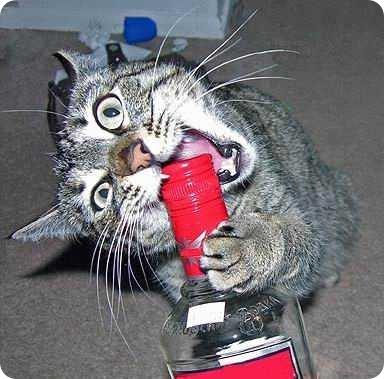 Коты тоже празднуют Новый Год (50 фоток)