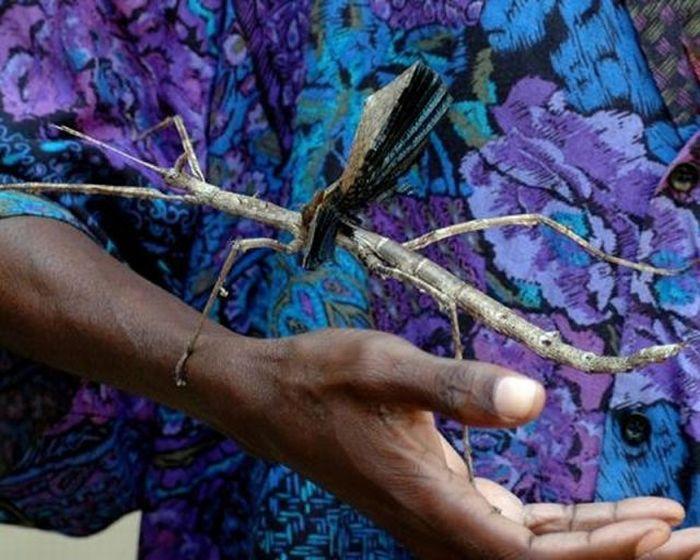 Самые большие насекомые в мире (47 фотографий)