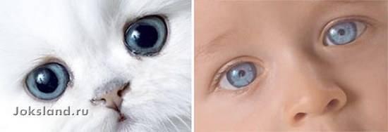 Позитив: Дети и котята