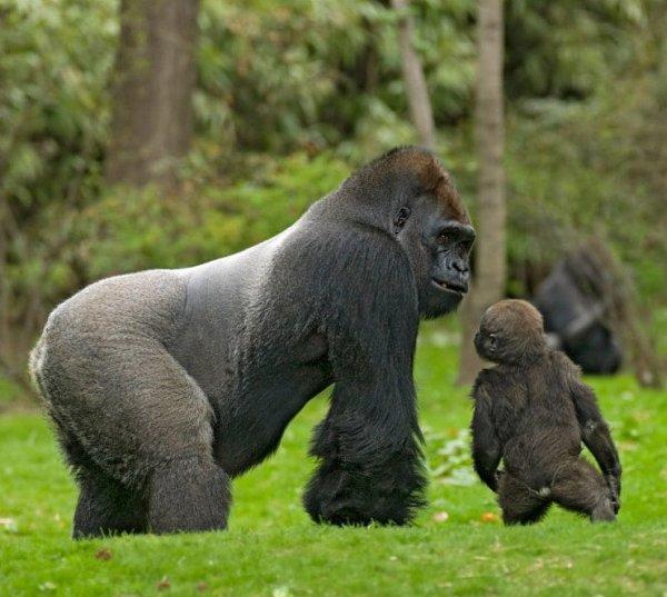Лучшие фотографии дикой природы 2008 (19 фото)