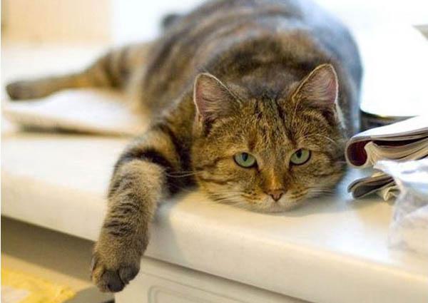 если бы все кошки на Земле внезапно умерли