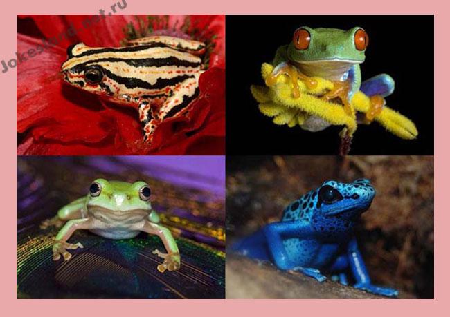 Интересные факты о лягушках (25 фото)