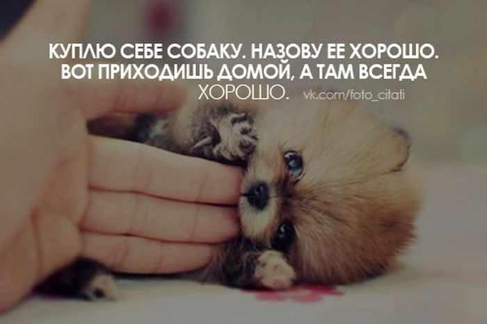 http://jokesland.net.ru/pc/kartinki_i_slova/17.jpg