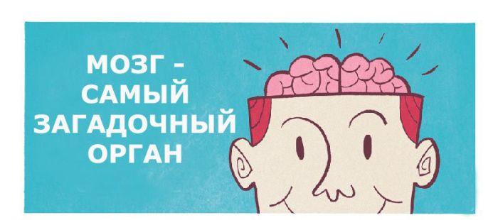 Как работает наш мозг (4 картинки)