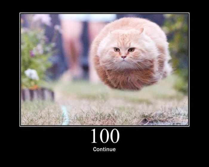 Ошибки сервера по-кошачьи (15 фотографий)