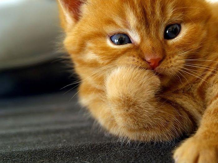 Кота выселяют из коммуналки