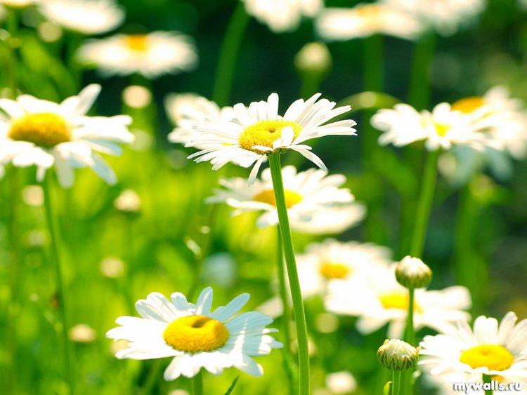 Пусть цветы говорят за вас!