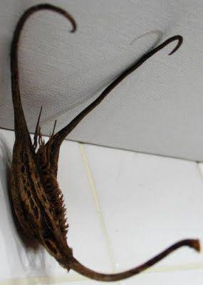 Самые жуткие растения планеты Земля (53 фото), photo:15