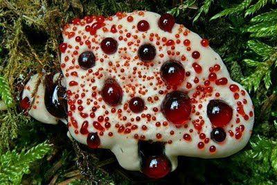 Самые жуткие растения планеты Земля (53 фото), photo:1