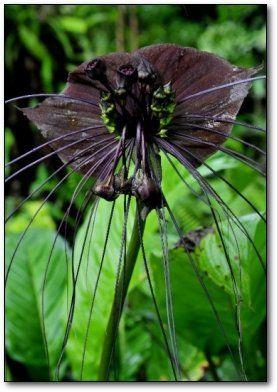 Самые жуткие растения планеты Земля (53 фото), photo:22
