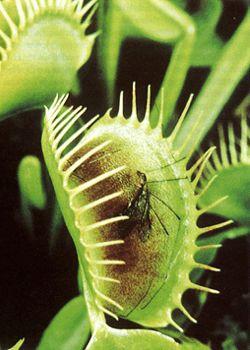 Самые жуткие растения планеты Земля (53 фото), photo:30