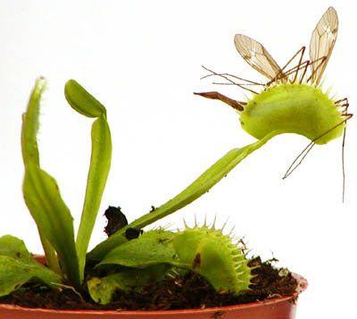 Самые жуткие растения планеты Земля (53 фото), photo:31