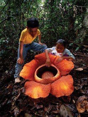 Самые жуткие растения планеты Земля (53 фото), photo:40