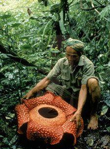 Самые жуткие растения планеты Земля (53 фото), photo:42