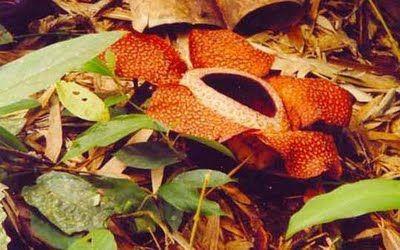 Самые жуткие растения планеты Земля (53 фото), photo:45