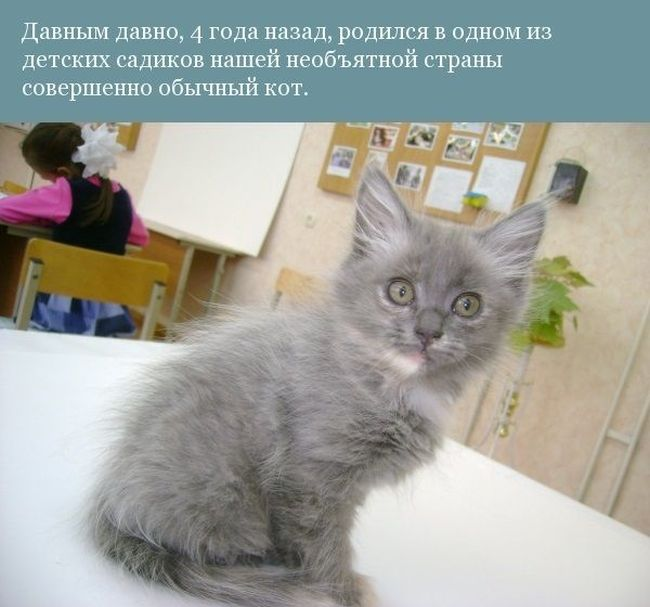 История одного котика (12 фото)