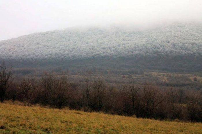 Редкий природный феномен в венгерском лесу