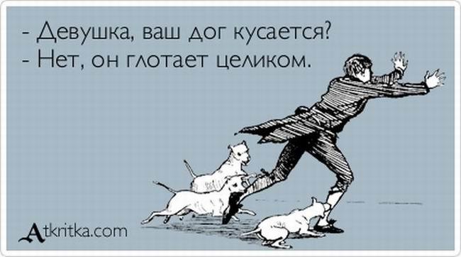 Девушка, ваша собака кусается?